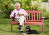picture of lap  - Old man with cat in lap and dog beside him - JPG