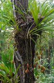 Cymbidium aloifolium wild orchid in Thailand