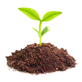 pic of photosynthesis  - Young seedling growing in a soil - JPG