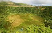 Plants On The Volcano In Azores islands