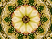 image of dogwood  - Dogwood flower is digitally altered into wavy lines - JPG