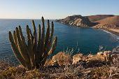 Rocky coast and cactus along Mexico's Baja Peninsula