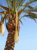 Nature-scenery with palmtrees on blue sky