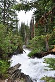nature landscape of forest and mountain river, grand teton national park, wyoming, usa