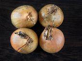 Four Ripe Golden Onions