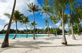 pic of french polynesia  - Beautiful beach with coconut palms on Bora Bora island in French Polynesia - JPG