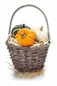 pumpkins over white background