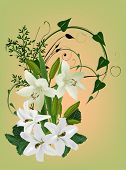 illustration with white lily flowers on light background