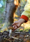 stock photo of face-fungus  - Little hand gathers mushrooms in the forest on summer day