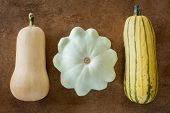 image of butternut  - Butternut delicata and flying saucer squash varieties - JPG