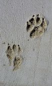 foto of dog footprint  - A dog - JPG