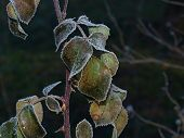 image of bohemia  - plants covered with frost - JPG