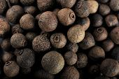 foto of peppercorns  - Black pepper seed - JPG