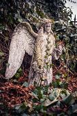 picture of cemetery  - Angel on the cemetery of bone storage church - JPG