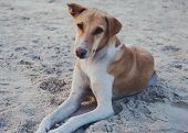 picture of dog eye  - The homeless indian dog is sitting on the sand - JPG