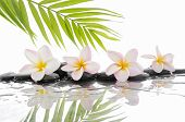 stock photo of frangipani  - spa concept with zen stones and Frangipani and palm leaf  - JPG