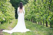 picture of orchard  - Woman in a white dress in the orchard - JPG
