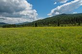 pic of cloud forest  - Beautiful mountain landscape with wild flowers in the meadow on a background of mountains forest and blue sky with clouds - JPG