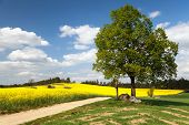 foto of crucifix  - View of way between rapeseed field and lime tree with crucifix and beautiful clouds  - JPG