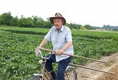 stock photo of hoe  - Senior peasant riding a bicycle with hoe in hand in the fertile land - JPG