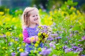 pic of country girl  - Child picking wild flowers in field - JPG