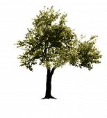 vector realistic green tree on white