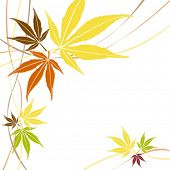 Autumn or fall maple leaves vector.