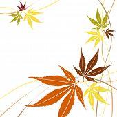 Herbst oder Herbst Maple leaves Vektor.