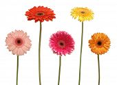 five flowers isolated on white