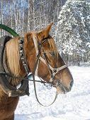 A Horse In Winter