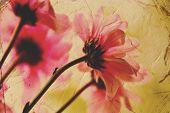 Femenina tarjeta de felicitación de flores vintage.