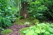 pic of fairy-tale  - Little fairy tale door in a tree trunk - JPG