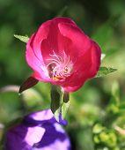 Pink Swirl Flower