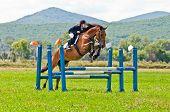 rider show jumps