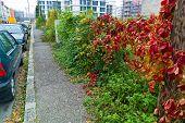 intergrown Bürgersteig