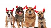 halloween team of four brown dogs of different breeds dressed as devils while standing and sitting o poster