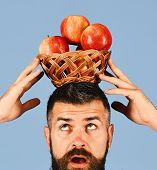Man With Beard Holds Wicker Bowl With Fruit Isolated On Blue Background. Guy Presents Homegrown Harv poster