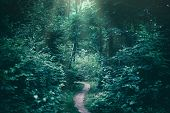 Narrow path in a dark forest illuminated by sunrays. Gloomy atmosphere. Nature. poster
