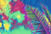 Coco Palm Tree Leaf On Sky Background. Neon Palm Leaf On Colorful Sky. Tropical Vacation Digital Ill poster