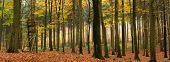 Mixed autumn forest panorama