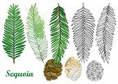 Vector Set With Outline Sequoia Or California Redwood In Black And Pastel Green Isolated On White Ba poster