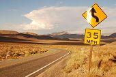 Curvy desert road