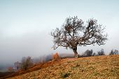 Amazing scene on autumn mountains. Alone naked tree in fantastic morning mist. Carpathians, Europe.  poster