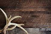 A Pair Of Real White Tail Deer Antlers Over A Rustic Wooden Background. They Are Used By Hunters Whe poster