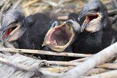lustige Baby-Vögel