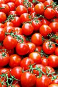 stock photo of tomato plant  - Bunch of fresh red tomatoes on vine - JPG
