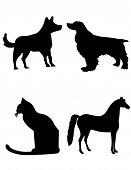 Dog Cat Horse Shilouttes