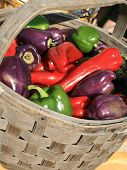 Mixed Peppers In  Basket