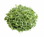 stock photo of hyssop  - Pile of Bacopa monnieri bitter leaves isolated over white background - JPG