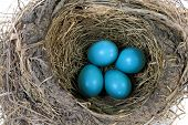 picture of bird egg  - Close - JPG